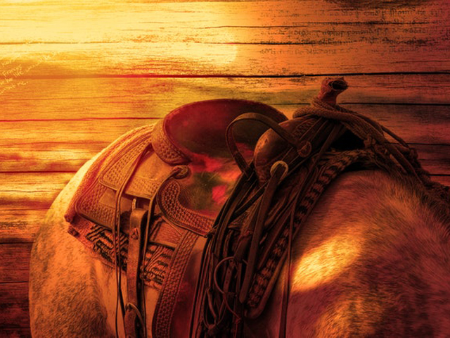 horse-s-back-ride-horse-saddle-40385